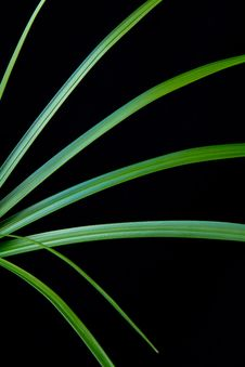 Free Graphic Plant Leaves Close-up Royalty Free Stock Photography - 21050987