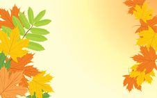 Free Autumn Background With Maple And Ash Leaves Stock Images - 21051124