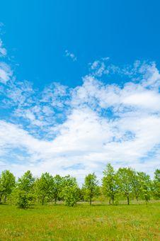Free Summer Meadow Stock Photos - 21051253