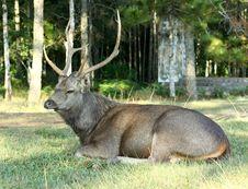 Free Deer Stock Photos - 21051303