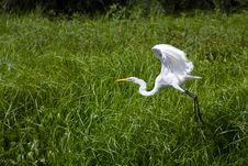 Free Taking Flight Stock Photo - 21052170