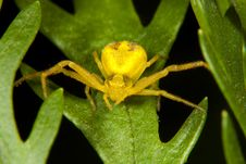 Free Yellow Spider On Green Leaf Stock Photography - 21052222
