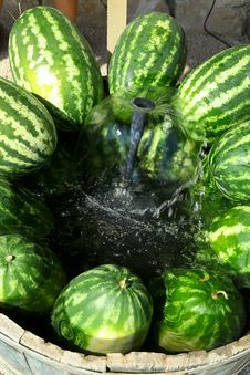 Free Watermelon Stock Images - 21052434