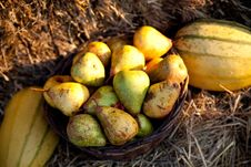 Free Fresh Pears On Hay Stock Images - 21053184