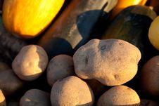 Free Potatoes Stock Photos - 21053453