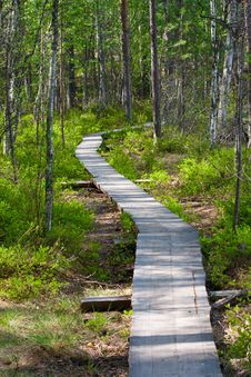 Free Path In The Woods Royalty Free Stock Image - 21055086