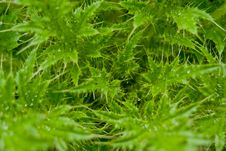 Free Green Plants Macro Royalty Free Stock Photo - 21055435