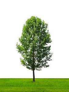 Free Tree Royalty Free Stock Photos - 21058018