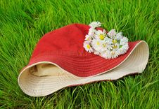 Free Daisy Bouquet On Red Hat Royalty Free Stock Image - 21059616