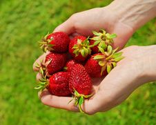 Free Handful Of Strawberries Stock Image - 21059621