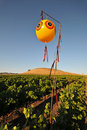 Free Field Of Wine Grapes With Balloon Royalty Free Stock Photo - 21060945
