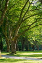 Free Trees In A Park Royalty Free Stock Images - 21063789