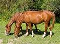 Free Horses Stock Photo - 21067980