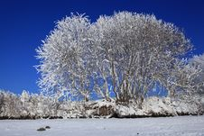 Free A Tree In Snow Against The Blue Sky Stock Photos - 21060873