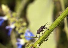 Free Stink Bug Stock Photo - 21062770