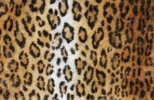 Free Leopard Fur Background Royalty Free Stock Photos - 21063248