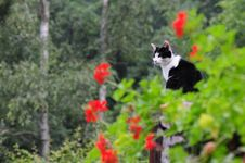 Free Black And White Cat Stock Image - 21064071