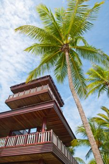 Free Coconut Tree With Watch Tower Royalty Free Stock Images - 21064529