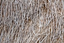 Free Dry Grass Royalty Free Stock Image - 21065476