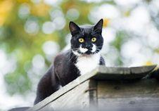 Free Cat Outdoor Stock Photos - 21067413