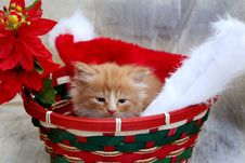 Pretty Yellow Kitten In Christmas Basket Royalty Free Stock Photos