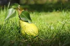 Green Pear With Leafes On Grass. Royalty Free Stock Photos
