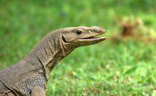 Smiley Lizard Royalty Free Stock Image