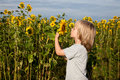 Free Smelling Sunflower Stock Image - 21073731