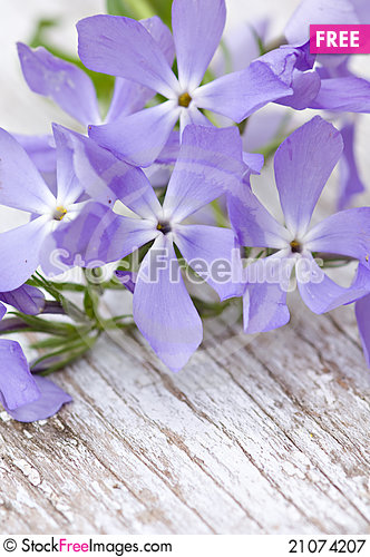 Free Bunch Of Blue Flowers Royalty Free Stock Photography - 21074207