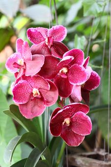 Free Purple Orchid Stock Photos - 21070253
