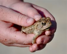 Free Frog And Freckles Stock Photography - 21071002