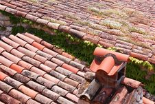 Tile And Plant Covered Roof Stock Photos