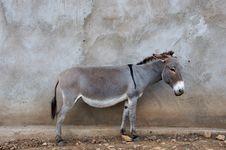 Free African Donkey Royalty Free Stock Image - 21072046