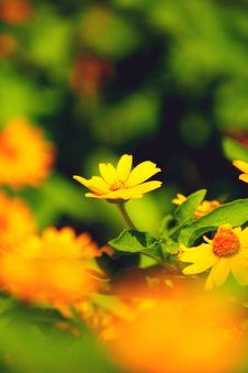 Free Daisy S Field Stock Photography - 21072412