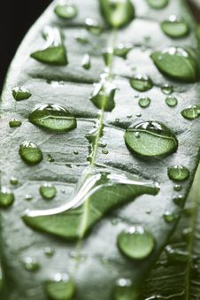 Free Water Drops On Leaf Royalty Free Stock Photo - 21074145