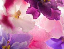Free Background With Pink Violets Stock Photography - 21074242