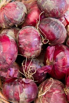 Free Red Onions Stock Image - 21074521