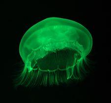 Free Jellyfish Stock Image - 21074651