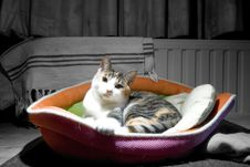 Free Cat In A Basket Directly Looking Into The Camera Stock Photo - 21075090