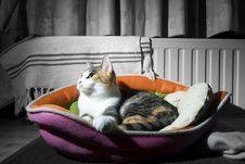 Free Cat In A Basket 2 Stock Photography - 21075102