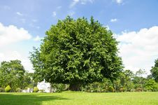 Free Tree On The Grass Royalty Free Stock Photo - 21075365