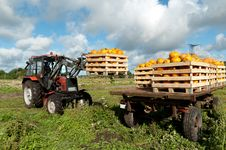 Free Tractor Loading Pumpkins Stock Image - 21076291