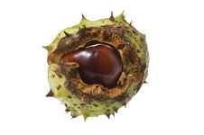 Free Conker In Shell Stock Photography - 21078132