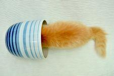 Free Kitten In Flowerpot Royalty Free Stock Photos - 21079008