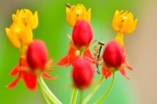 Free Small Mantis Between Flower Stock Photos - 21079183