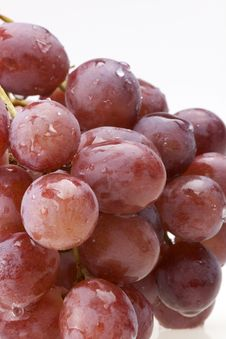 Free Red Grape Vine Royalty Free Stock Photo - 21079505