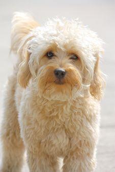 Free Look At Dog Royalty Free Stock Image - 21079856