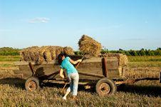 Free Baling Hay In Filed Stock Photos - 21081033