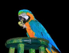 Free Isolated Portrait Of A Colorful Macaw Stock Image - 21083901