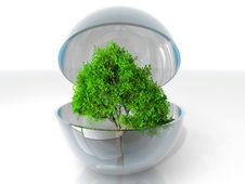 Free Tree In A Bubble Stock Photo - 21084090
